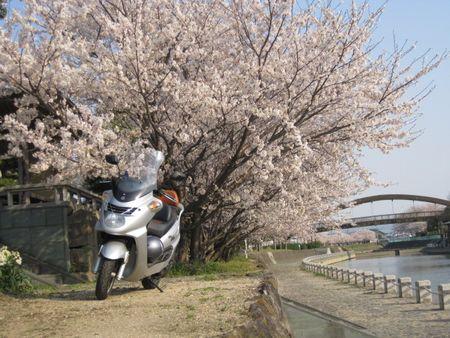 cherry_riv.jpg