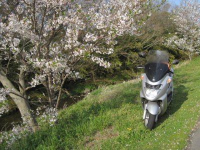 川べりの桜とバイク
